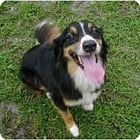 Adopt A Pet :: Bailey - Orlando, FL