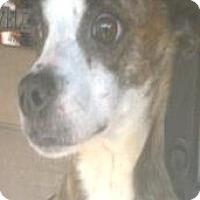 Adopt A Pet :: Anna Lee - Moulton, AL