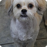 Adopt A Pet :: Leo - Yuba City, CA