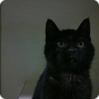 Adopt A Pet :: Greg - Hamilton, ON