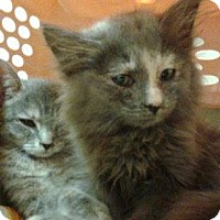 Adopt A Pet :: Julie and Harriet - Maywood, IL