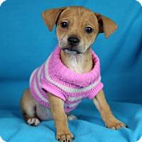 Adopt A Pet :: Emili - Minneapolis, MN