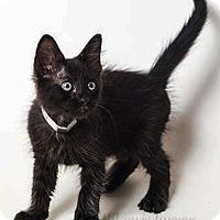 Adopt A Pet :: Banjo - N. Billerica, MA