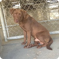 Adopt A Pet :: Hodgens - Livingston Parish, LA