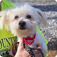 Adopt A Pet :: Erick - Whitehall, PA
