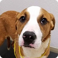 Adopt A Pet :: Berreta - Grants Pass, OR