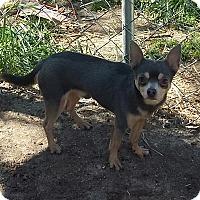 Adopt A Pet :: Jason - Carthage, NC