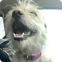 Adopt A Pet :: Lulu - Las Vegas, NV