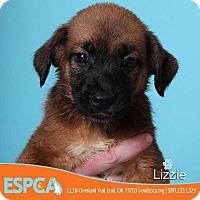 Adopt A Pet :: Lizzie - Enid, OK