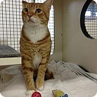 Adopt A Pet :: Johnnie - Vero Beach, FL