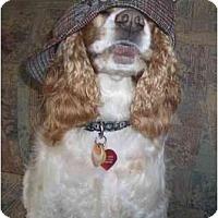 Adopt A Pet :: Luigi - Tacoma, WA