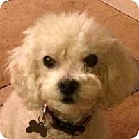 Adopt A Pet :: Tessa - La Costa, CA