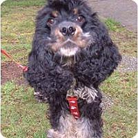 Adopt A Pet :: Apollo - Tacoma, WA