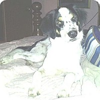 Adopt A Pet :: Tess - Beaumont, TX