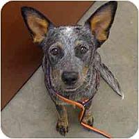 Adopt A Pet :: Billie - Phoenix, AZ