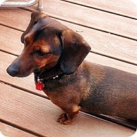Adopt A Pet :: Archie - Toronto, ON