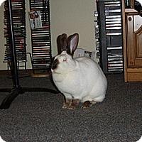Adopt A Pet :: Bunny - Eugene, OR