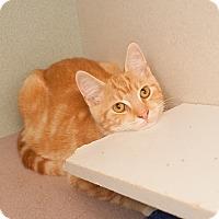 Adopt A Pet :: Ravioli - Shelton, WA