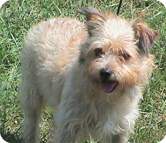 Terrier (Unknown Type, Small) Mix Dog for adoption in Maynardville, Tennessee - Max