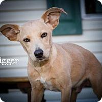 Adopt A Pet :: DUGGAR - BROOKSVILLE, FL