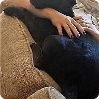 Adopt A Pet :: Pinky - Boston, MA