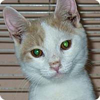Adopt A Pet :: Surprise - Lawrenceville, GA