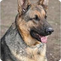 Adopt A Pet :: Hank - Hamilton, MT