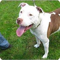 Adopt A Pet :: Hercules - Seattle, WA