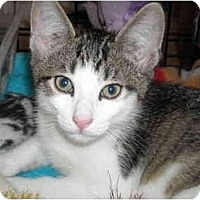 Adopt A Pet :: Winky - Riverside, RI