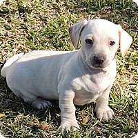 Adopt A Pet :: Gunther - La Habra Heights, CA