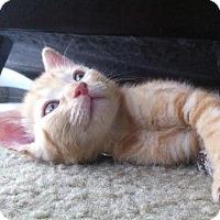 Adopt A Pet :: Noel - Ft. Lauderdale, FL