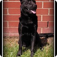 Adopt A Pet :: Smokey - Indian Trail, NC