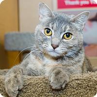 Adopt A Pet :: Carly - Irvine, CA