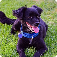 Adopt A Pet :: Murphy - Santa Monica, CA