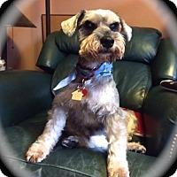 Adopt A Pet :: Ruben~~ADOPTION PENDING - Sharonville, OH