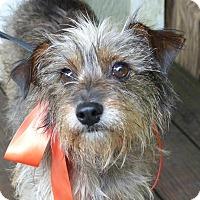 Adopt A Pet :: Buffy - Baton Rouge, LA