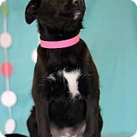 Adopt A Pet :: Tidbit - Waldorf, MD