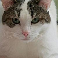 Adopt A Pet :: Calista - Auburn, CA