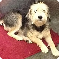 Adopt A Pet :: Turner - Lancaster, OH