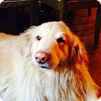 Adopt A Pet :: Rocket - New Canaan, CT