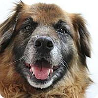 Adopt A Pet :: Ginger - Hastings, NY