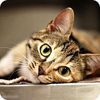 Adopt A Pet :: Dixie - Athens, GA
