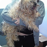 Adopt A Pet :: Layla - Lorain, OH
