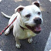 Adopt A Pet :: Kingston - Acushnet, MA