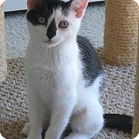 Adopt A Pet :: Ethell - North Highlands, CA