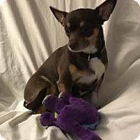 Adopt A Pet :: Gracie - Avon, NY