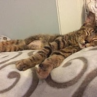 Adopt A Pet :: Sprite - Hamilton., ON