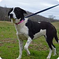 Adopt A Pet :: DOLLY - Rockwood, TN