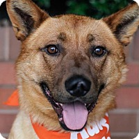 Adopt A Pet :: Ripley - Pitt Meadows, BC