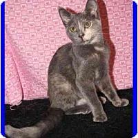 Adopt A Pet :: Shanti - Orlando, FL